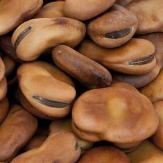 Seminte de fasole -Fasole Bob-Vicia faba L.