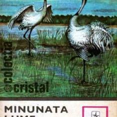 Minunata lume a pasarilor - Autor(i): Ion Bordeianu
