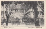 VALCELE , COVASNA , VILELE ORGHIDAN, Necirculata, Printata