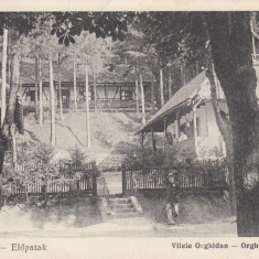 VALCELE, COVASNA, VILELE ORGHIDAN - Carte Postala Transilvania dupa 1918, Necirculata, Printata