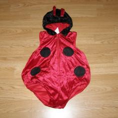 Costum carnaval serbare animal buburuza pentru copii de 9-12 luni - Costum Halloween, Marime: Masura unica, Culoare: Din imagine