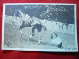 Ilustrata clasica - Jocheu trantit de cal ,circ.1905 Spic Grau ,goarna 111