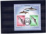 Guinea - Bissau - dolphins