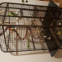 Papagal Micul Alexandru + Colivie + Accesorii si Mancare PRET NEGOCIABIL