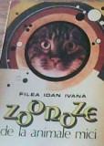 Filea Ioan Ivana - Zoonoze de la animalele mici