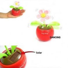 Floare Solara