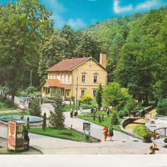Bnk cp Baile Moneasa - Vedere din statiune - circulata - marca fixa - Carte Postala Crisana dupa 1918, Printata