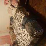 2 paturi duble +saltea.