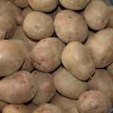 Samanta cartofi rosii 0756 695 686 - Legume