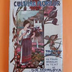 Cultura florilor - Ilie Morlova 1927/ R7P4S - Carte gradinarit