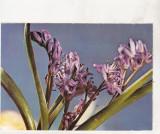 Bnk cp Romania - Felicitare - flora - necirculata
