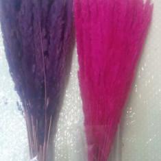 Plante naturale uscate  -  IARBA  - diverse culori