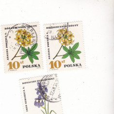 Timbre st. polonezi flori