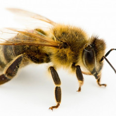 De vânzare 15 fam. de albine, la alegere din 30 - Apicultura
