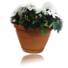 Ghiveci de flori lalea 20 cm