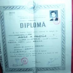Diploma de Licenta la Universitatea Al.Ioan Cuza Iasi- Facultatea de Drept 1979 - Diploma/Certificat