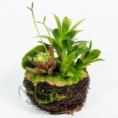 Aranjament Floral / Model 10