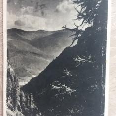 RC - BUSTENI 26 - Carte Postala Muntenia dupa 1918, Necirculata, Fotografie