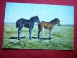 Ilustrata 2 Magari din Dartnoor Anglia