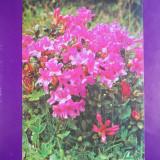 HOPCT 28491 -FLORI -NECIRCULATA