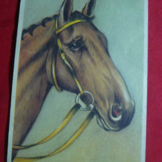 Ilustrata- Litografie -  Cal , inc.sec.XX