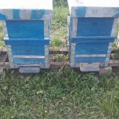 Lazi pentru albine - Apicultura