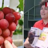 Seminte rare de Struguri Ruby Red Japonezi Uriasi - 5 seminte pt semanat