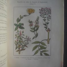 IOAN ROVENTA - PLANTELE MEDICINALE - Carte Medicina alternativa