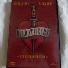 Wild at heart - dvd - Film actiune Altele, Engleza