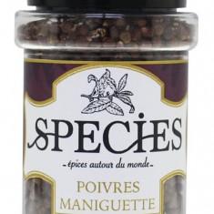 Piper Maniguette din Costa de Fildes Nou