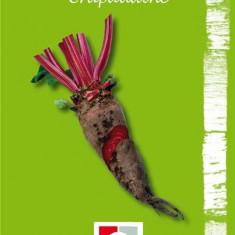 Seminte de sfecla Crapaudine - Seminte rosii