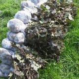 Butasi de mur THORNFREE (fara spini)