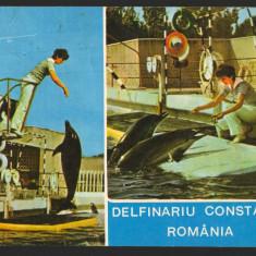 CPI (B8839) CARTE POSTALA - DELFINARIU CONSTANTA. ROMANIA, MOZAIC - Carte Postala Dobrogea dupa 1918, Circulata, Fotografie