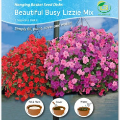 Mix de discuri cu seminte de petunii Beautiful Busy Lizzie