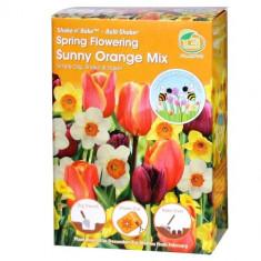 Shake'n Rake Bulbi - Sunny Orange