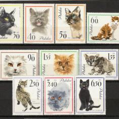 Polonia.1964 Rase de pisici  KF.87