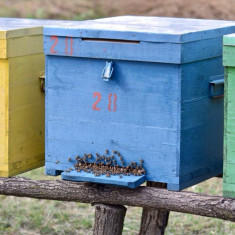 Stupi si familii de albine puternice - Apicultura