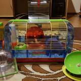 Cusca pentru hamsteri (Habitrail playground) - Cusca, cotet, tarc si colivie