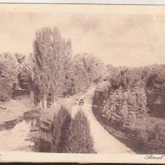 Bnk cp Craiova - Parcul Bibescu - uzata interbelica, Circulata, Printata