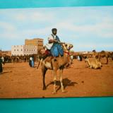 HOPCT 32671 MAROC LUPTATORI DIN SAHARA -NECIRCULATA, Printata