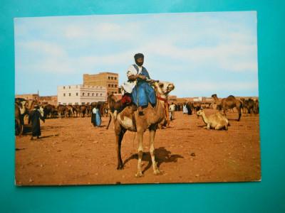 HOPCT 32671  MAROC LUPTATORI DIN SAHARA  -NECIRCULATA foto