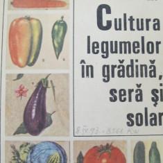 Cultura legumelor in gradina, sera si solar -Zaharia Suciu, ... - Carte gradinarit