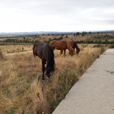 Cai frumosi si sanatosi Runcu Gorj - Cal de vanzare