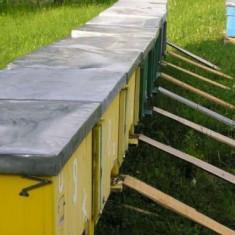 Albine de vinzare - Apicultura