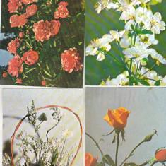 Bnk cp - Lot 12 carti postale - flori