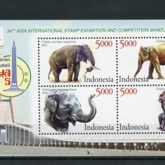 INDONEZIA 2015 ELEFANTI