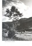 CP Z657 - VALEA TELEAJENULUI LA CHEIA -DATATA 1958 -RPR-NECIRCULATA