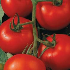Seminte tomate TAMARIS F1 - 500 seminte - Seminte rosii