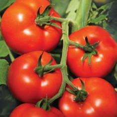 Seminte tomate IZMIR F1 - 500 seminte - Seminte rosii