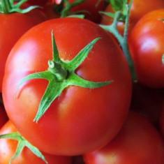 Seminte tomate BOBCAT F1 - 1000 seminte - Seminte rosii